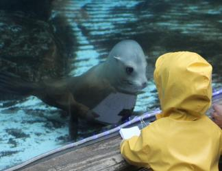 Photo credit: St. Louis Zoo Preschool