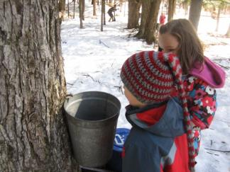 Ottauquechee students check their sap bucket.