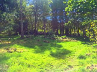 """A hill in """"Stickland"""" where the Cowgate students can visit regularly."""