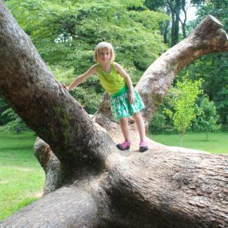 A downed tree becomes a favorite play space.